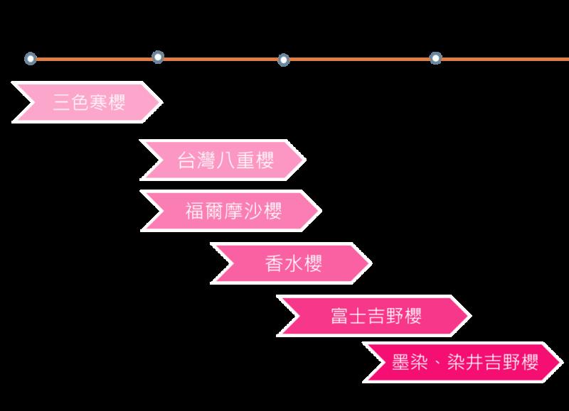 2021大熊櫻花林|2021櫻花季|櫻花季|新北櫻花|賞櫻地點